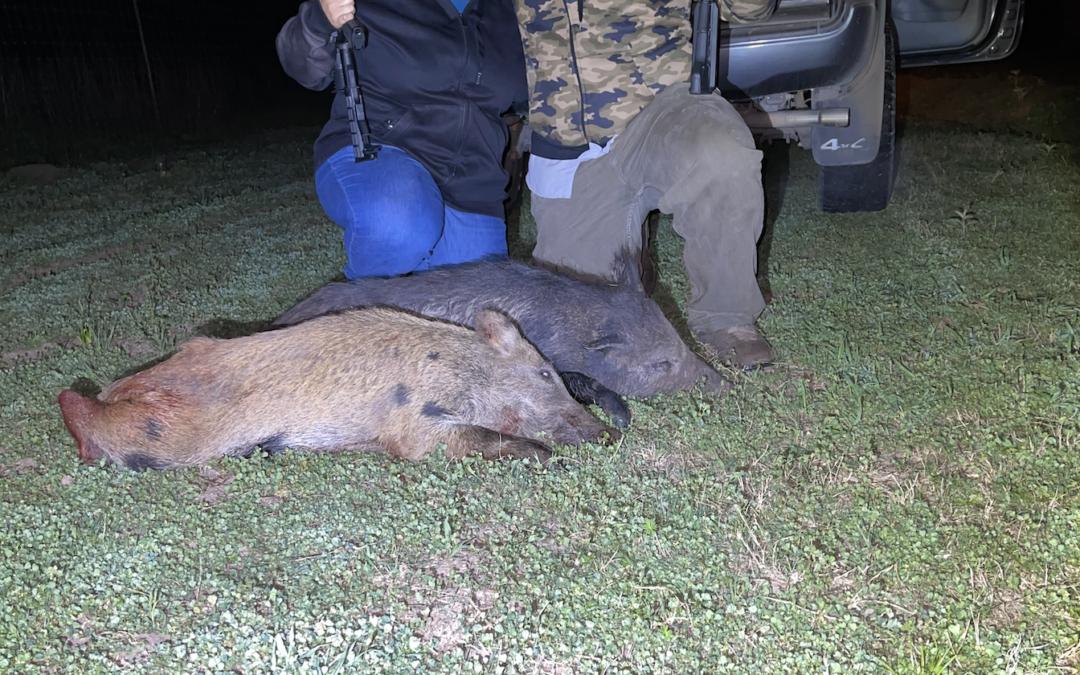 Thermal Hog Hunting – 2